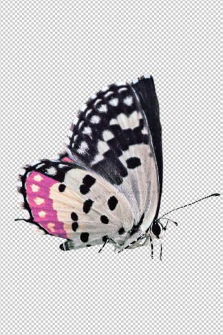 White-butterfly-with-pink-detail-png-sticker