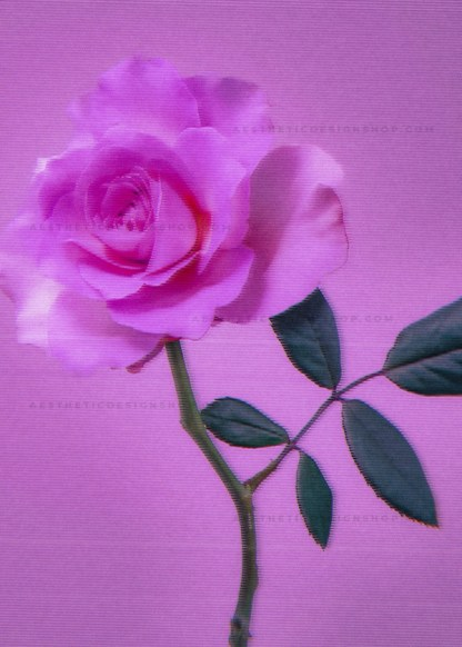 Pink rose with old tv glitch effect