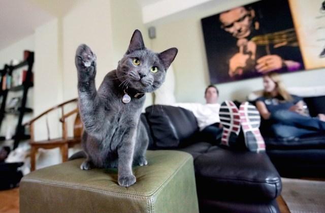 foto gatti belle