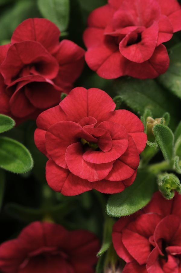 What Flowers Make Good Hanging Baskets