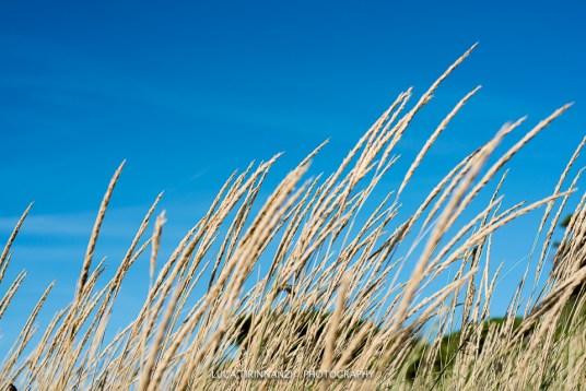 Dune sulla spiaggia