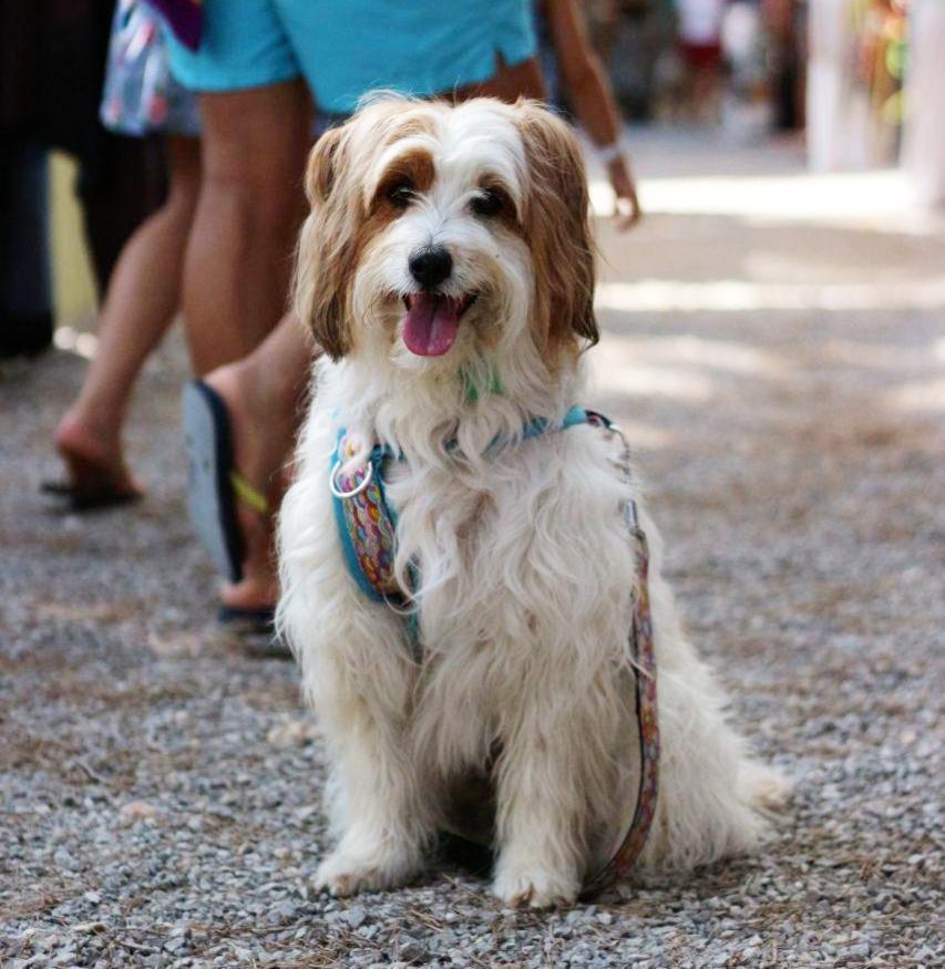 Perro en mercadillo Hippy Punta Arabi