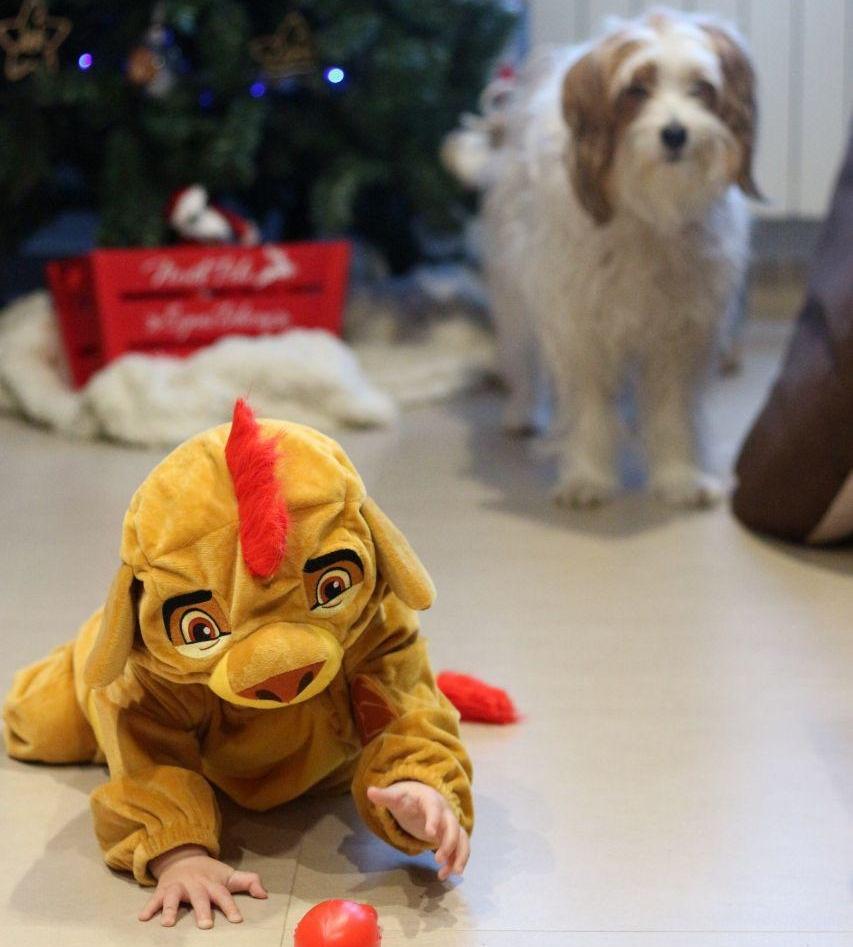bebé rey león