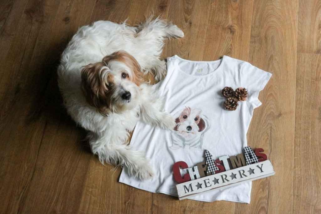 perro con camiseta personalizada