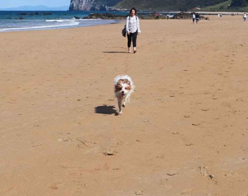 perro playa