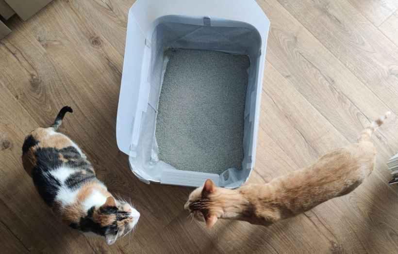 gatos en arenero