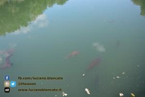 Reggia di Caserta - vista del parco - pesci