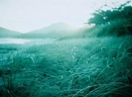 Feel the Sea