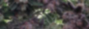 cannabis design, graphic design, design, branding, identity, identity design, packaging, web designer, website design, cannabis packaging, marketing, cannabis marketing, cannabis advertising, advertising, cannabis, marijuana, product design, marijuana packaging, weed packaging, weed design, cannabis branding agency, marketing agency, marijuana advertising, marijuana marketing, logo design, cannabis logo, marijuana logo