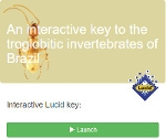 An interactive key to the troglobitic invertebrates of Brazil