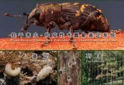 Wood Borers China