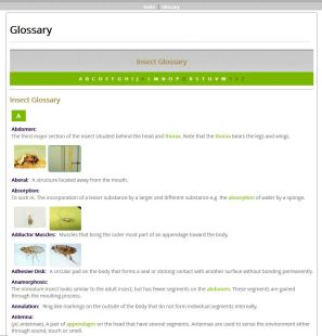 Fancy Green - Example Glossary (HTML)