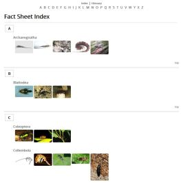 Plain Jane - Images top Index (HTML) example