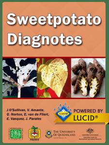 Sweetpotato splash screen