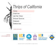 Thrips of California