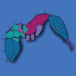 AntKey icon