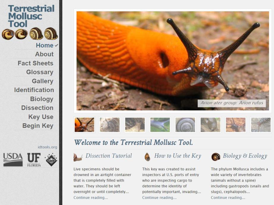 Terrestrial Mollusc website home page