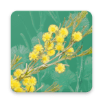 Wattle Acacia of Australia icon