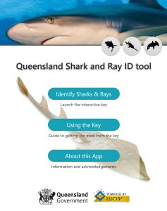 Queensland Shark and Ray ID tool