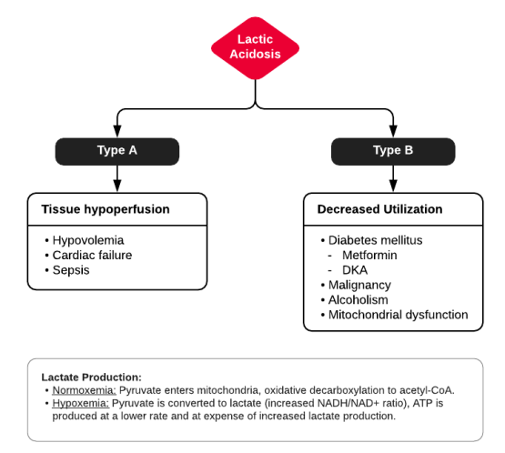 Differential Diagnosis of Elevated Serum Lactate