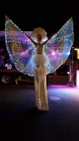 papillon-nuit