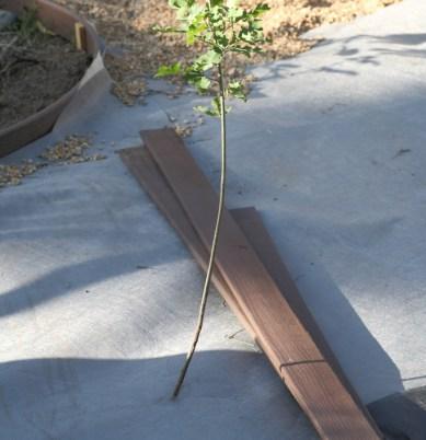 installing a gravel path luciole design landscape architects. Black Bedroom Furniture Sets. Home Design Ideas