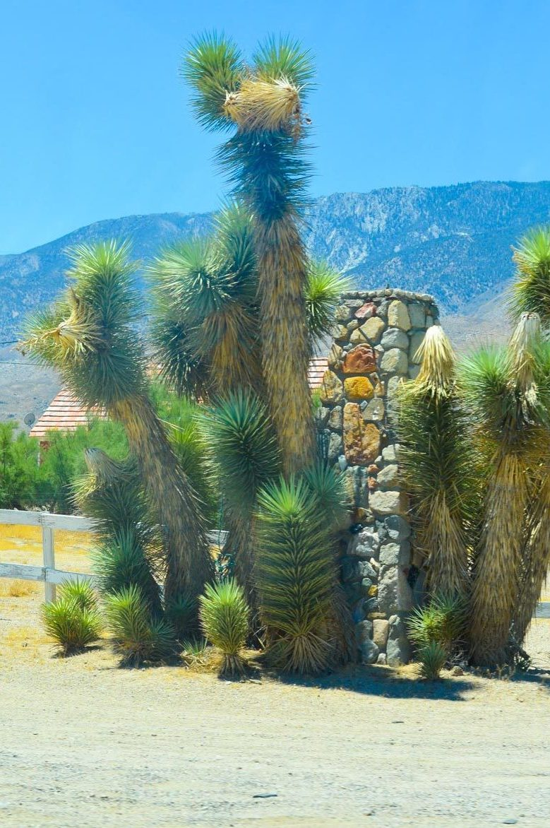 Travel Photo Diary: HWY 395 South | Part 2