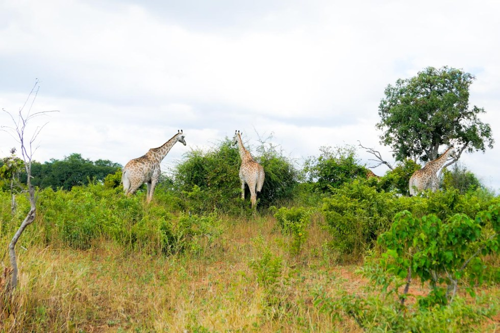 Chobe National Park Day Trip from Victoria Falls Review