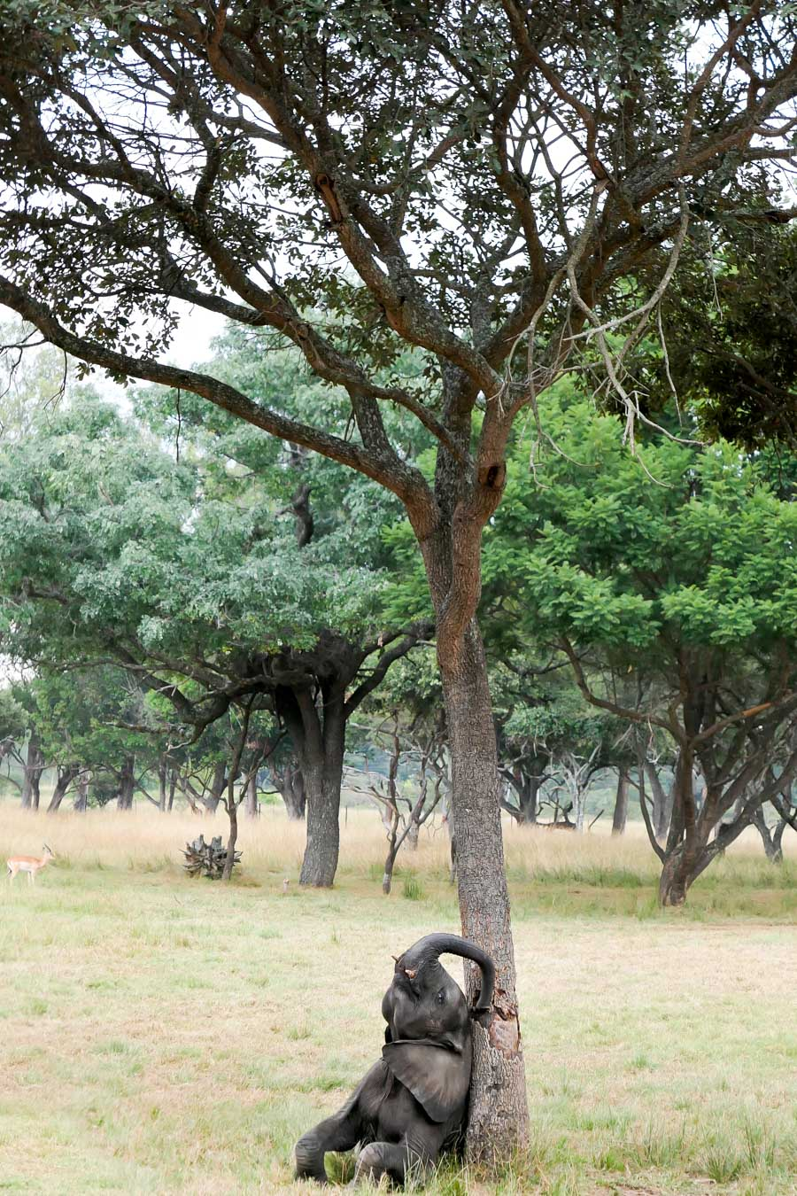 Wild is Life - What to do in Harare, Zimbabwe