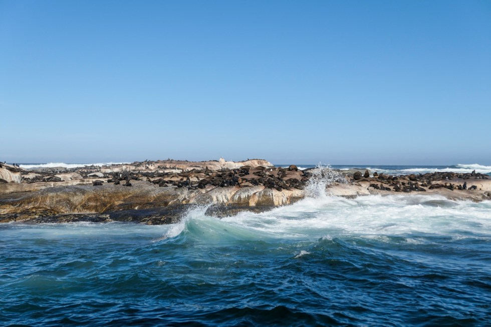 Activities in Cape Town Travel Blog - Day Trip to Cape of Good Hope - Seal Island