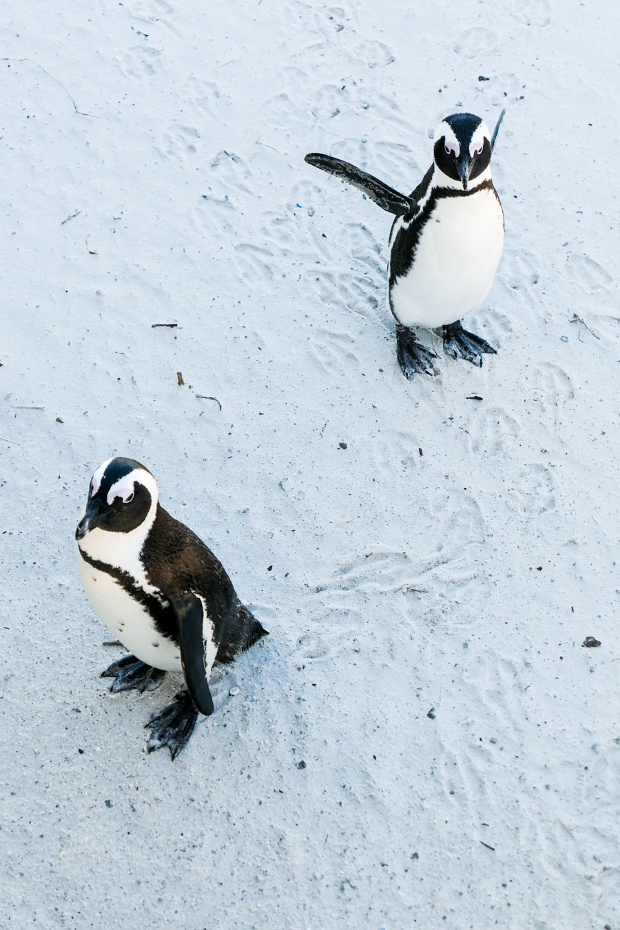 Activities in Cape Town Travel Blog - Day Trip to Cape of Good Hope - Cape Point Lighthouse - Boulder Beach Penguins
