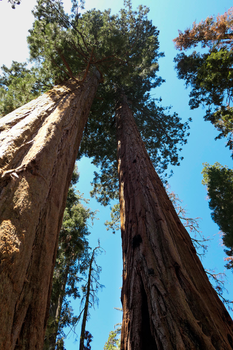 Sequoia National Park | Congress Trail