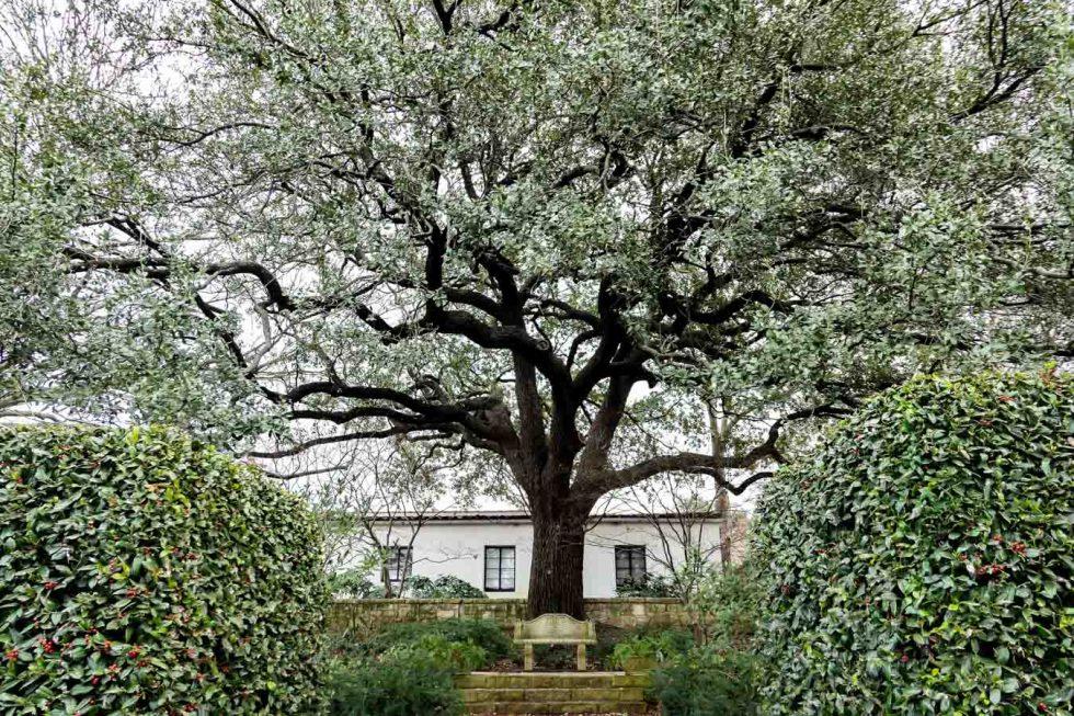 Dallas Arboretum + Botanical Gardens Photos + Review - Women's Garden Bench + Stairs