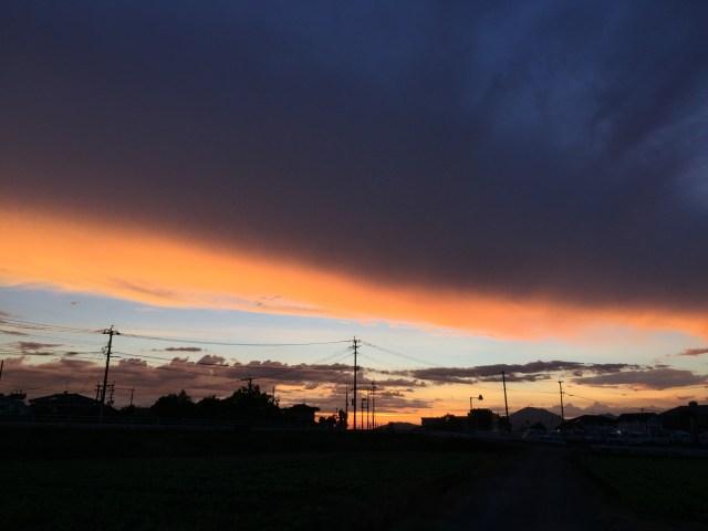 コリー犬ラッキー 雲が夕焼けに染まっています