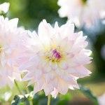 エレガントな花