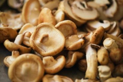 15_mushroom_ragout_06