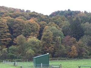 Fall Colors 1