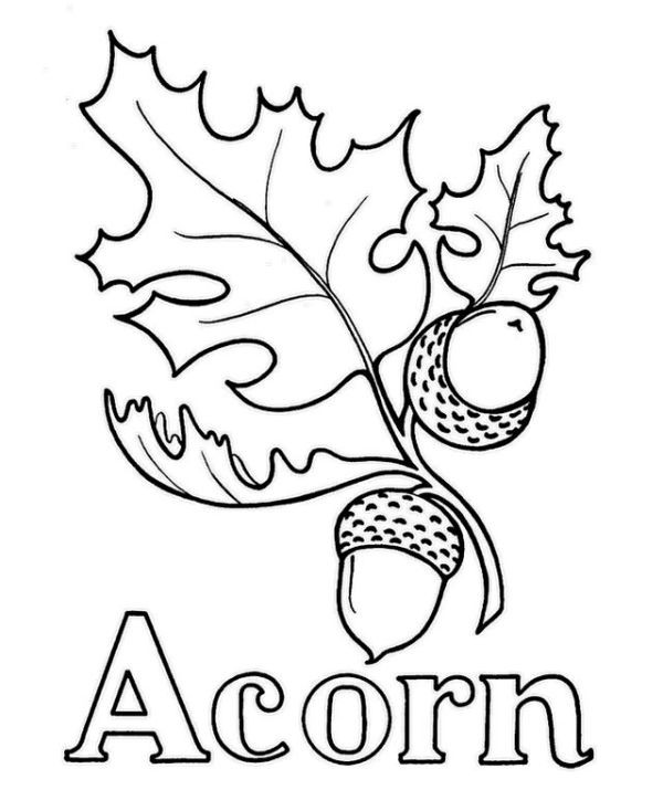 acorn coloring page # 32