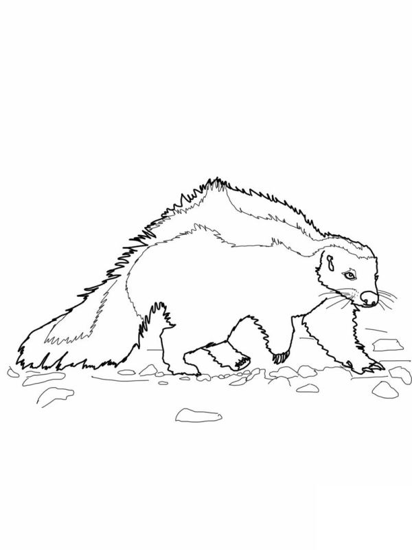 skunk coloring pages # 30