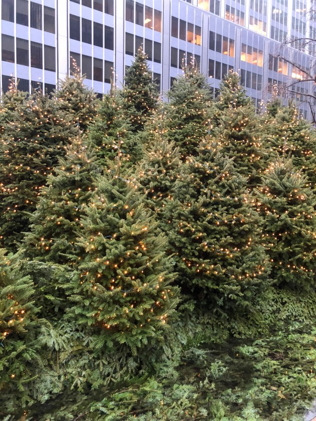 christmas trees in the financial district new york