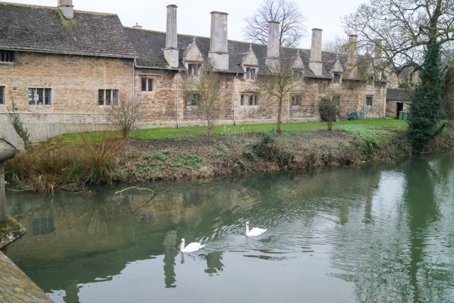 swans on the river in front of some houses