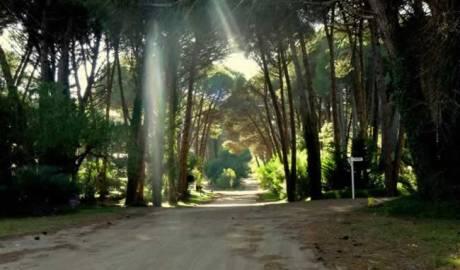 Bosques de Cariló