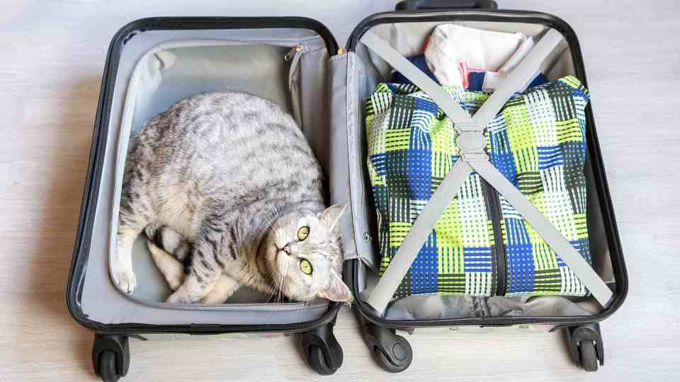 Descubre como Viajar con tu mascota sin morir en el intento