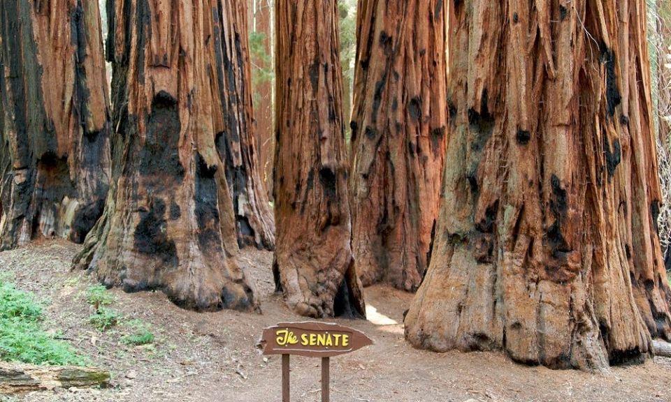 Monumento Nacional Muir Woods