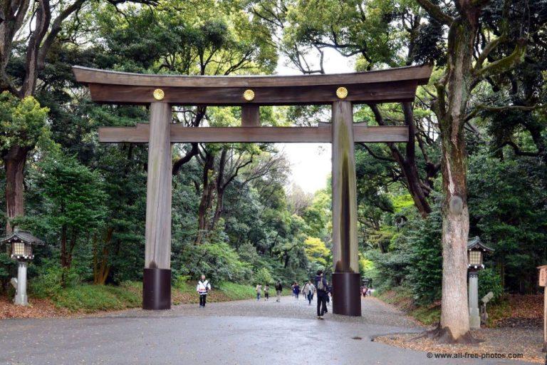 libros que tienes que leer antes de viajar a Japón