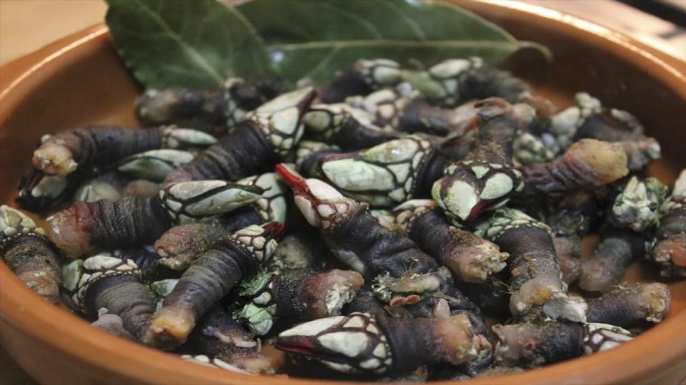 Andalucía es también uno de los mejores del país para comer percebes