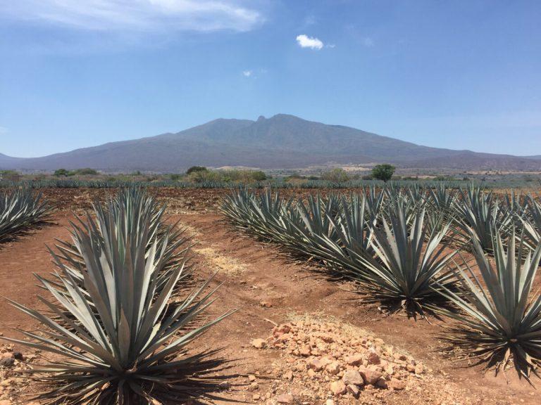 Descubre Tequila, el pueblo de donde es originaria la bebida más famosa de México