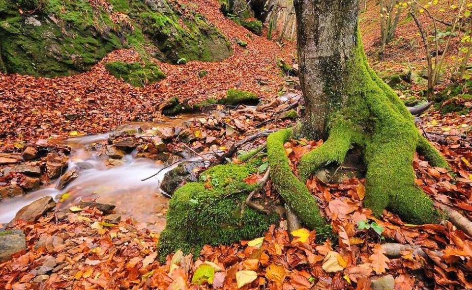planes de otoño para desconectar: Visitar Asturias
