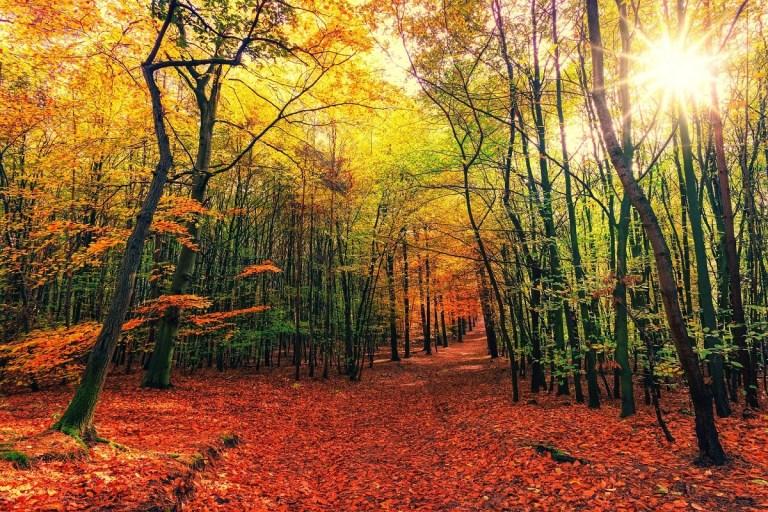 Rutas perfectas para otoño en España