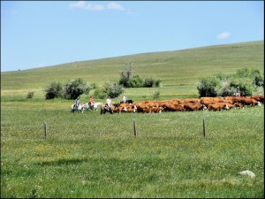 40318 Cattle Drive